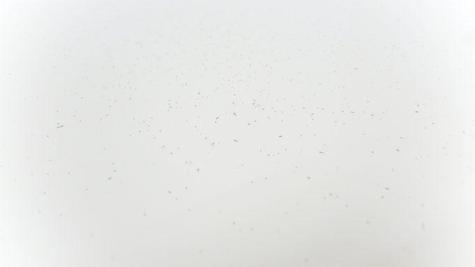 philips-9000-higekuzu (2)